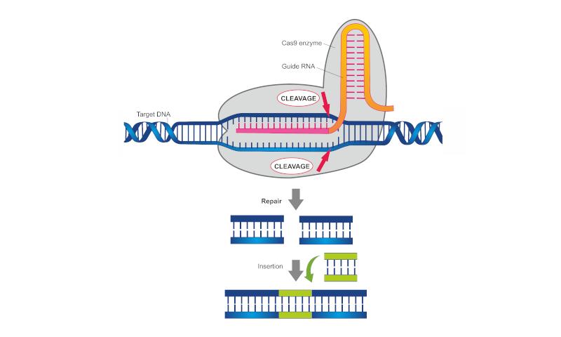 CRISPR2_180914_154217.jpg#asset:1677